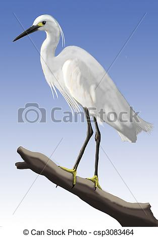Egret Illustrations and Clipart. 448 Egret royalty free.
