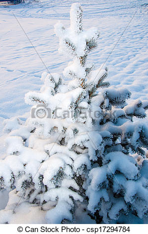 Pictures of The little fir tree and soft fluffy snow csp17294784.