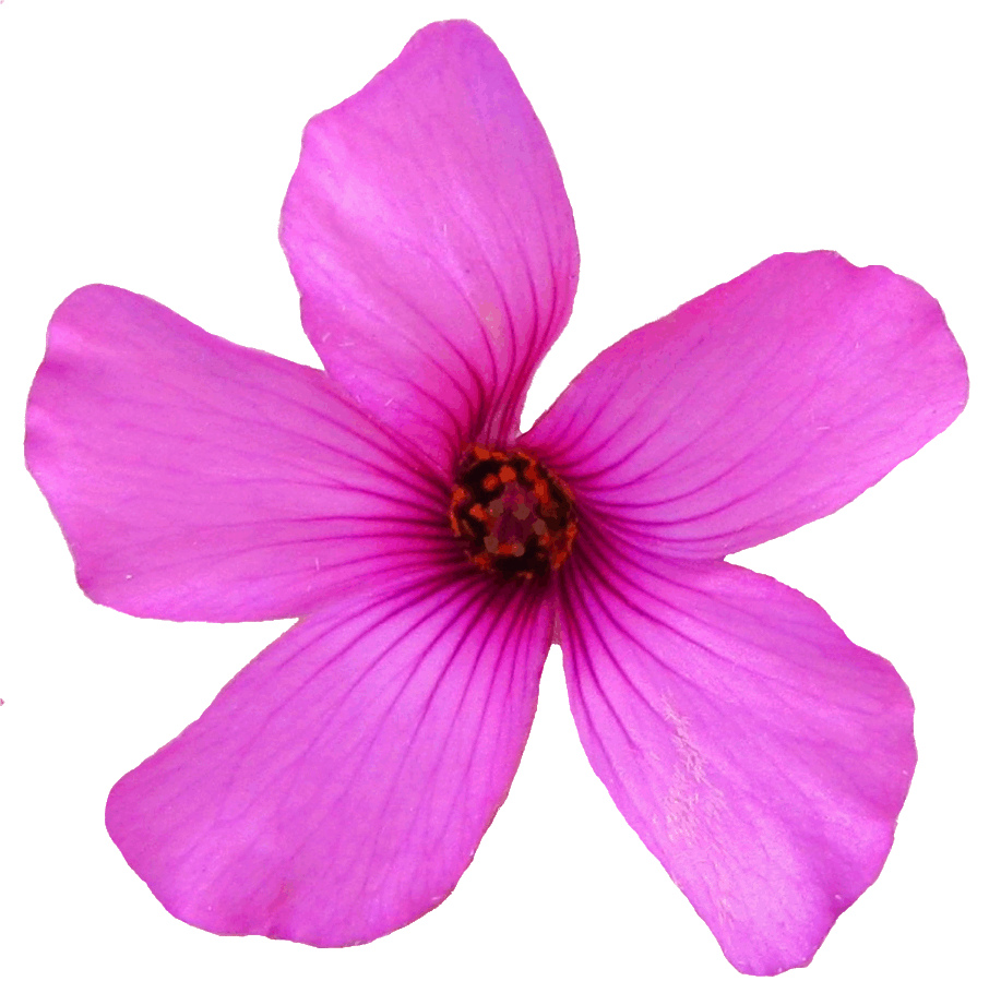 little pink flower clipart, 13 cm.