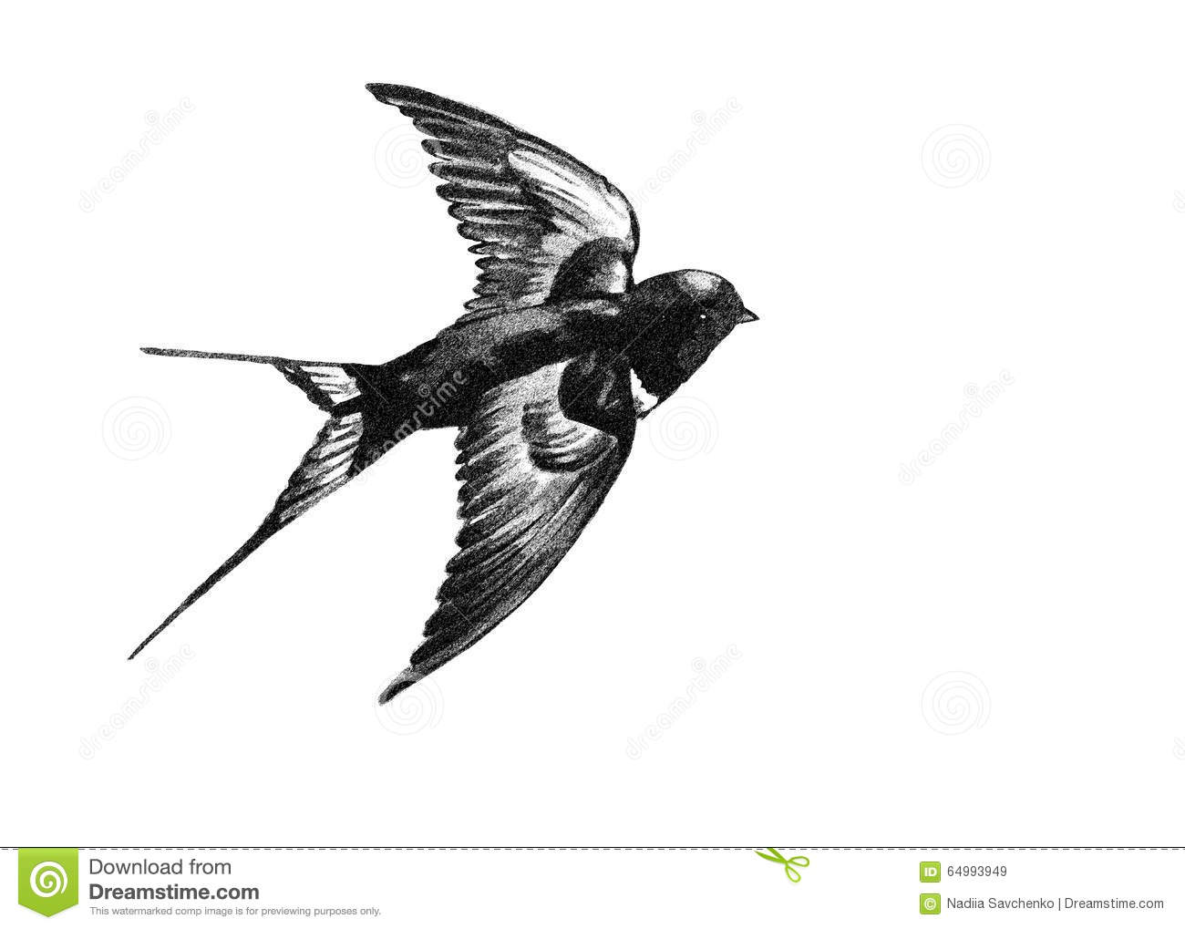 Swallow Flying Black And White Drawing Stock Vector.