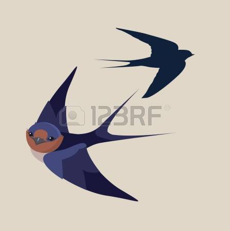 4,294 Swallow Stock Vector Illustration And Royalty Free Swallow.