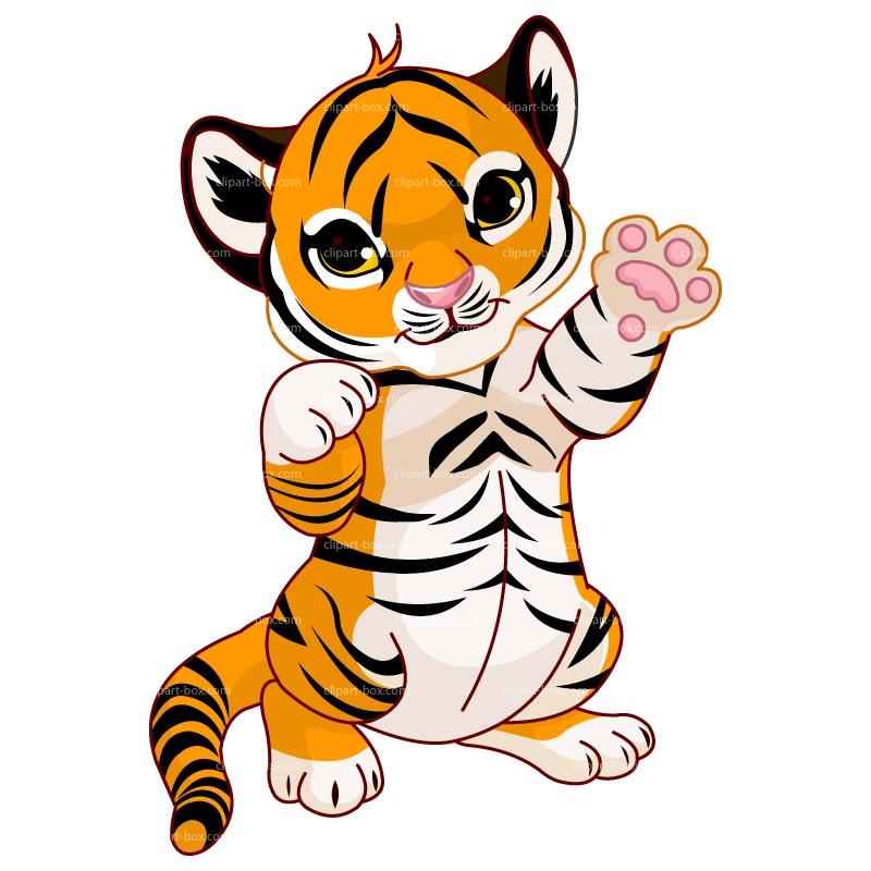 Cute Little Tiger PNG Cartoon.