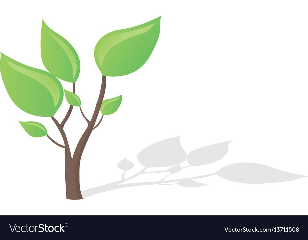 Small tree growing.