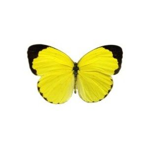 17 Best ideas about Yellow Butterfly Tattoo on Pinterest.