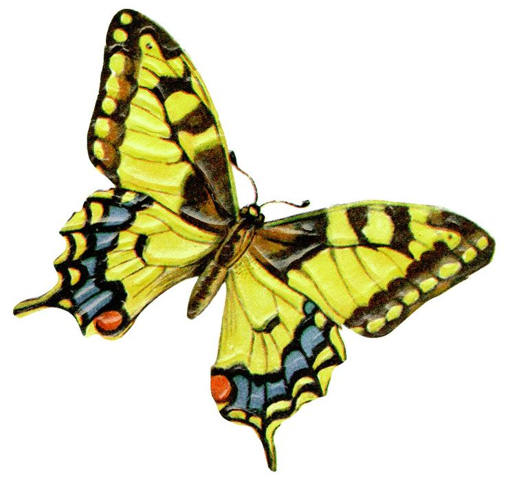 1000+ ideas about Yellow Butterfly Tattoo on Pinterest.