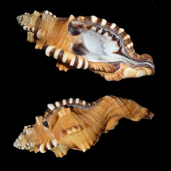 Sea, Snail.
