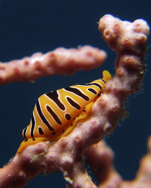 1000+ images about Sea invertebrates on Pinterest.