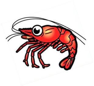 Free shrimp clipart 2.