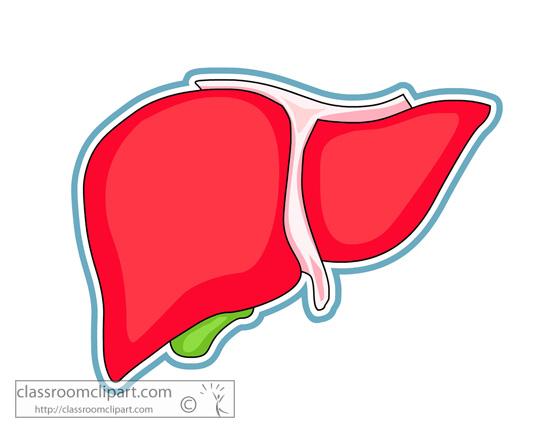 Liver Clipart.