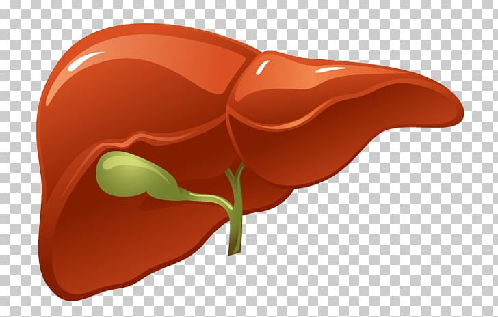 Organ Liver Human Body Kidney PNG, Clipart, Artery, Bile.