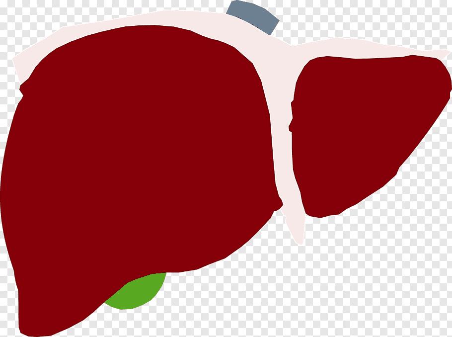 Love Background Heart, Liver, Hepatitis C, Fatty Liver.
