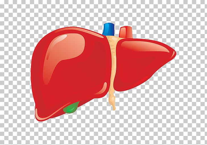 Liver Human body Organ Anatomy Homo sapiens, others PNG.