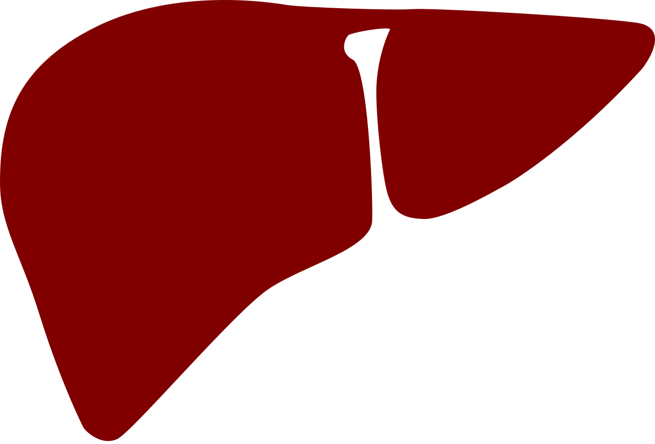Liver clipart beef liver, Liver beef liver Transparent FREE.