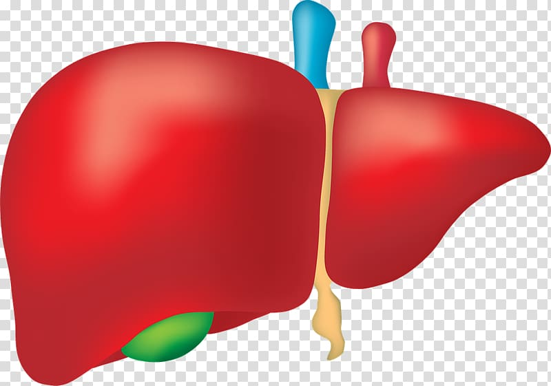 Fatty liver Liver disease Human body Organ, others.