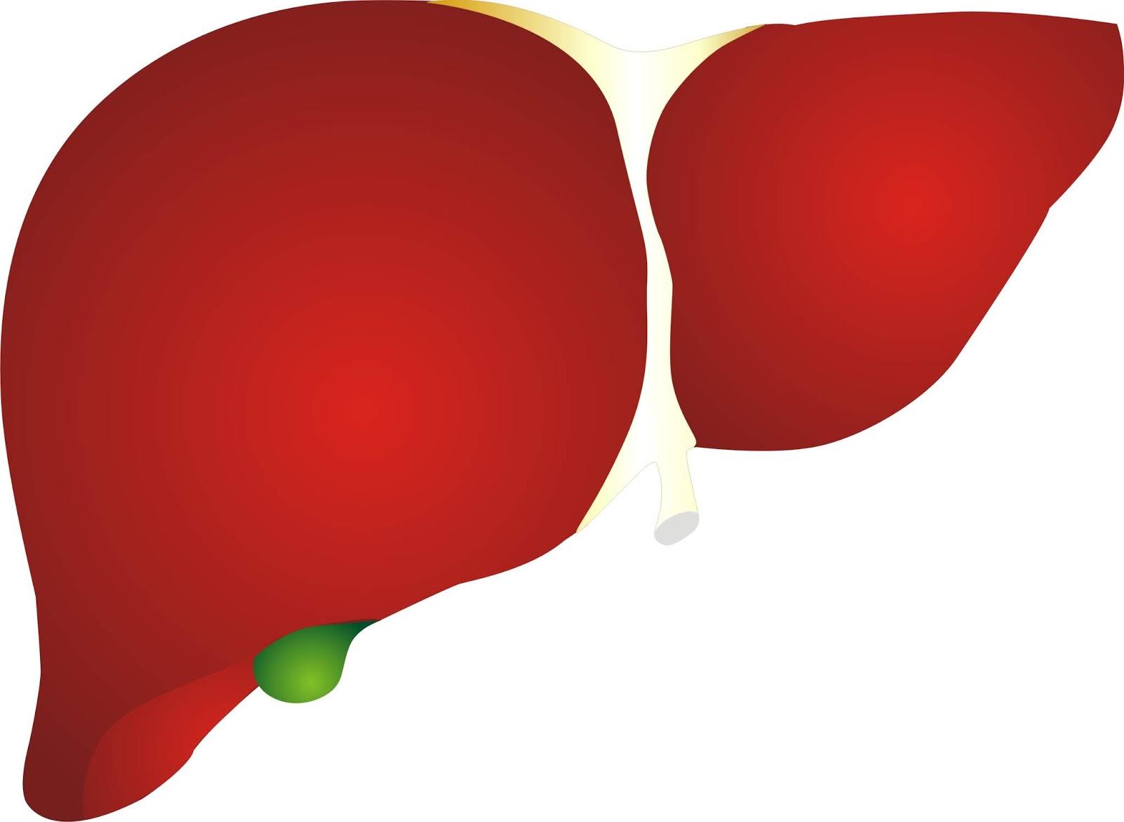LIVER PNG, LIVER IMAGES, Liver icon symbol 3D style Trendy.