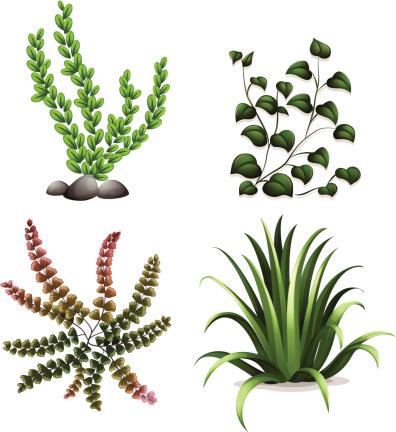 Liverworts Clip Art, Vector Images & Illustrations.