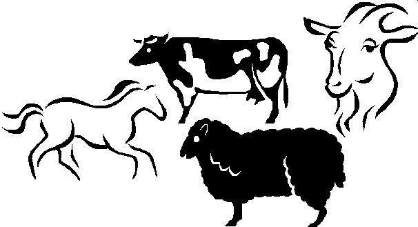 Livestock Show Animal Clipart.