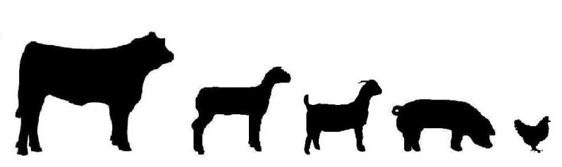 Livestock clip art.