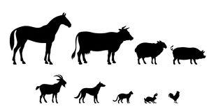 Livestock clipart free.