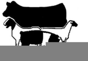 Livestock Judging Clipart.