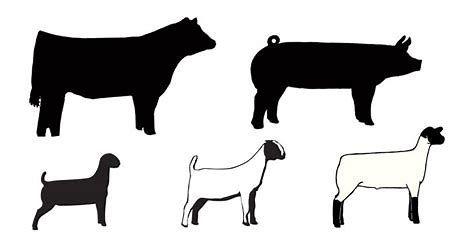 Image result for livestock show animal clip art.