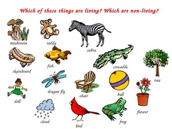 Living Vs. Nonliving Things Special Education Science.