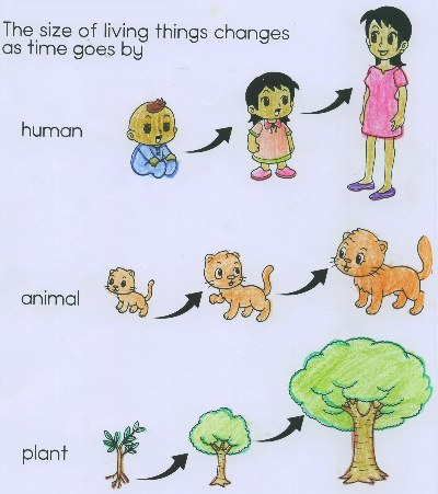 1000+ images about Characteristics of living things.