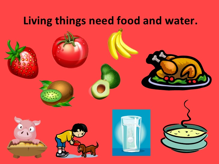 Characteristics of living things.
