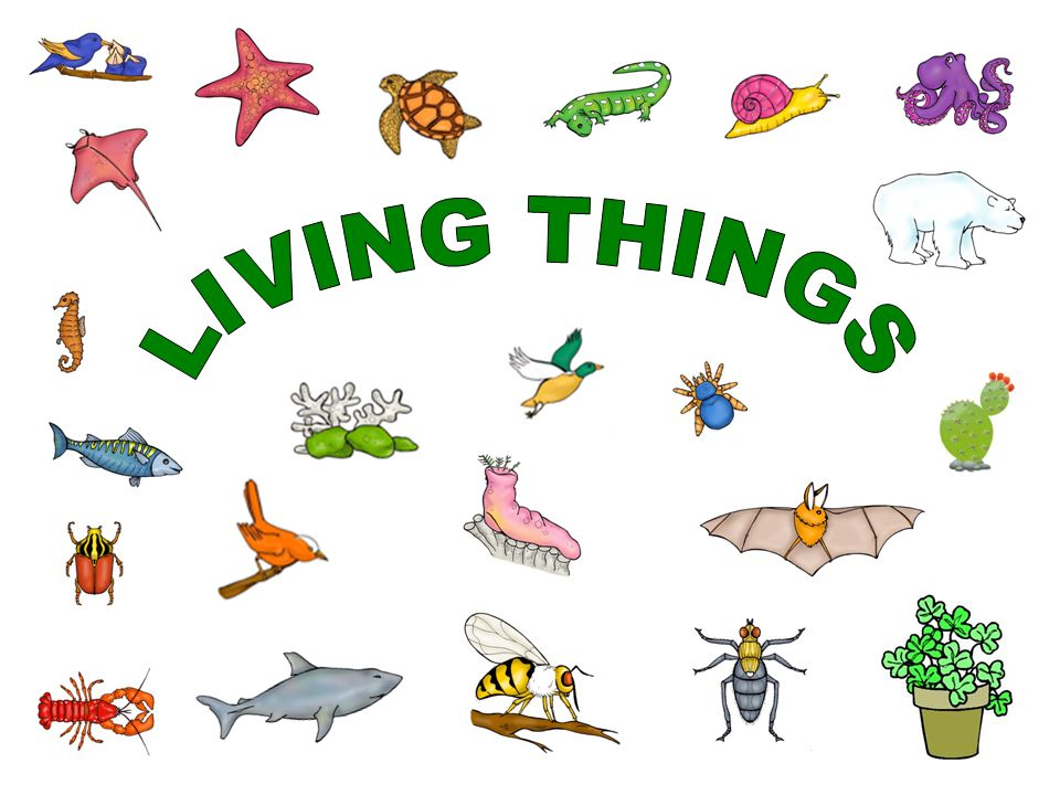 LIVING THINGS » Clipart Station.