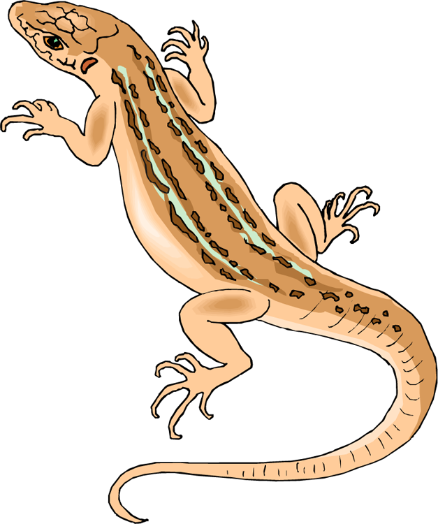 Lizard clipart - Clipground