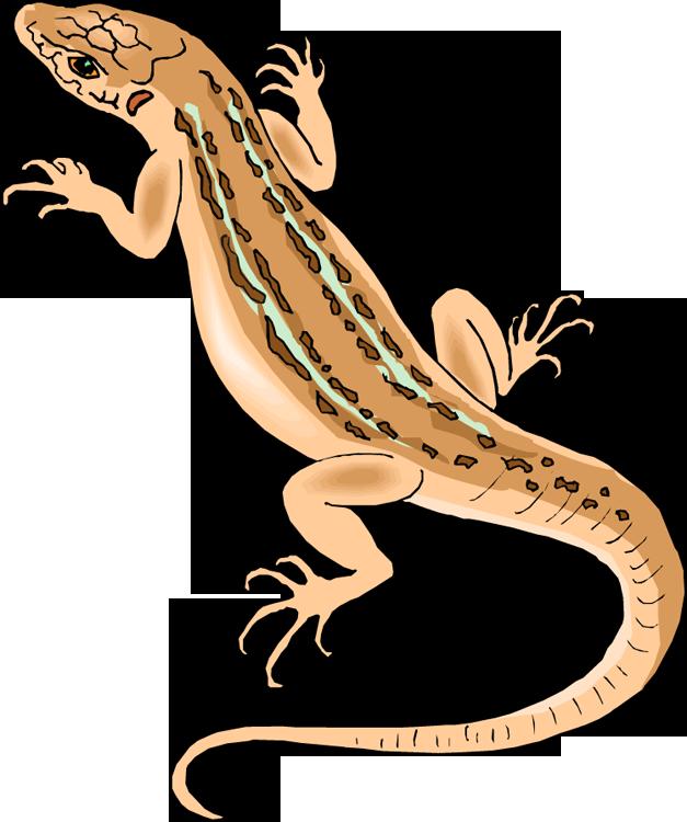Lizard Clipart.