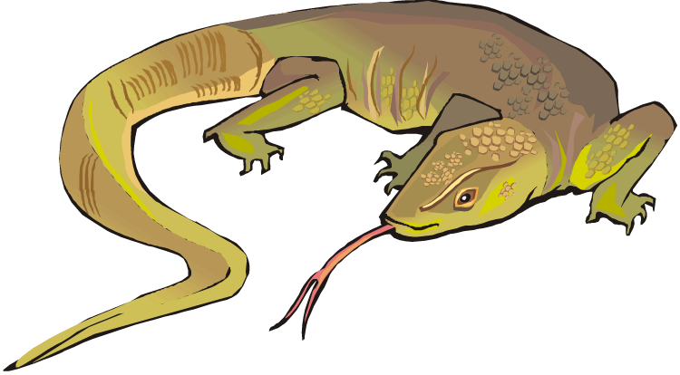 Monitor lizard clipart - Clipground