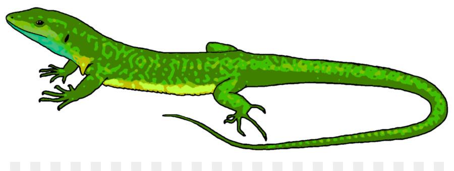 Lizard, Iguana png clipart free download.