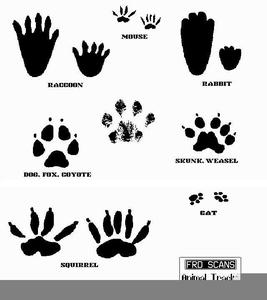 Lizard Footprints Clipart.
