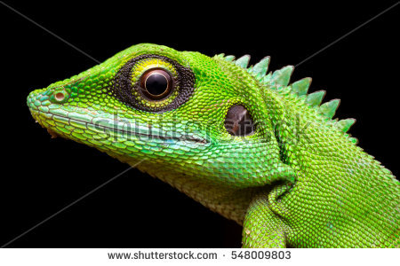 Lizard Stock Photos, Royalty.