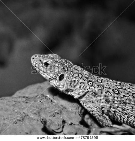 Reptile Habitat Stock Photos, Royalty.