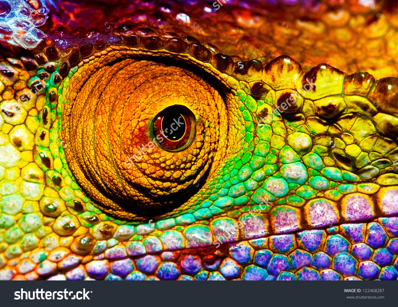 Photo Colorful Reptilian Eye Closeup Head Stock Photo 122468287.