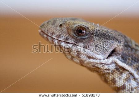 Reptile Head Stock Photos, Royalty.