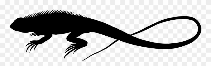 Lizard Reptile Silhouette Chameleons Drawing.