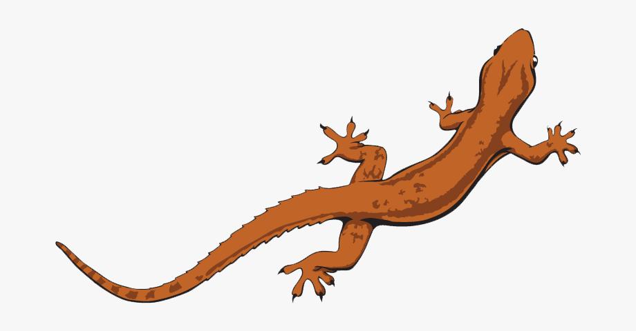 Lizard Clipart Newt.