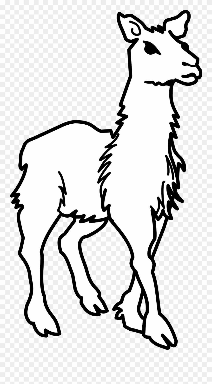 Llama Alpaca Evolution Drawing Computer Icons.