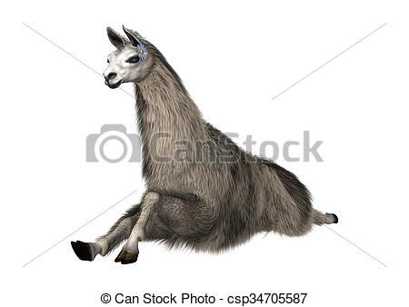 Stock Illustration of Llama or Lama on White.
