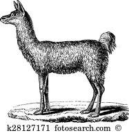 Llama glama Clipart and Illustration. 17 llama glama clip art.