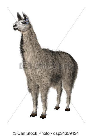 Drawings of Llama or Lama on White.