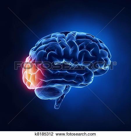 Clip Art of Occipital lobe.