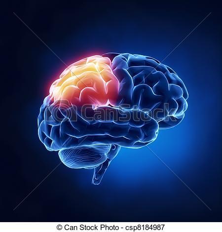 Stock Illustrations of Parietal lobe.