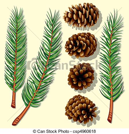 Loblolly pine tree branch clipart.