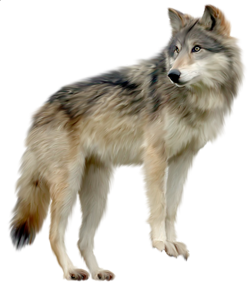 Loup Wolf Lobo Clipart Png.