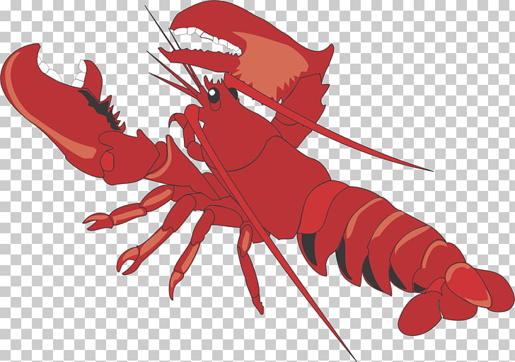 Lobster Cartoon , lobster PNG clipart.