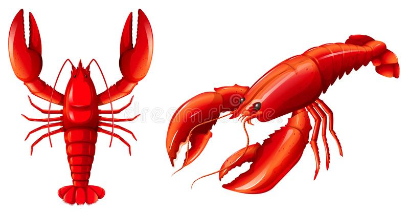 Lobster Stock Illustrations.
